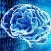 Cerebro virtual de Google se vuelve más inteligente y ayuda a cabo en otros proyectos