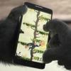 Vídeo: de Corning Gorilla Glass 4 tiene como objetivo proteger su teléfono de caídas